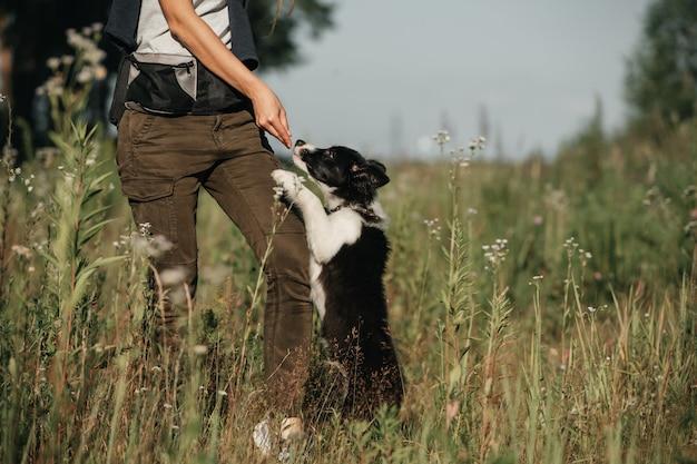 フィールドで黒と白のボーダーコリー犬の子犬を訓練する犬のハンドラー