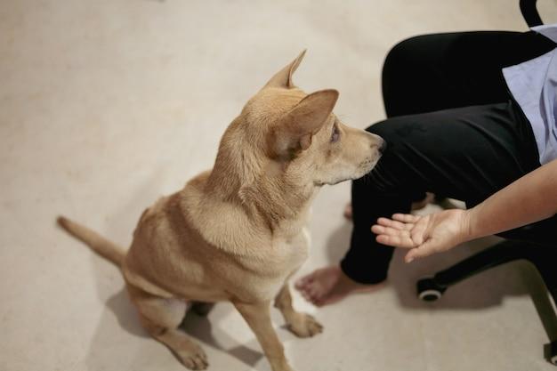 犬は家の中でアジア人の飼い主と楽しく遊んでいます。
