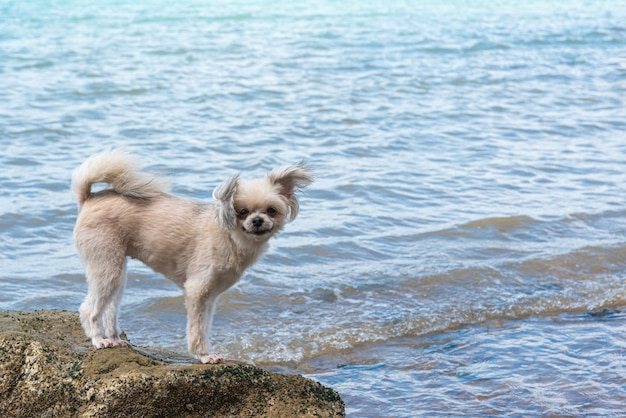 Dog happy fun on rocky beach when travel at sea