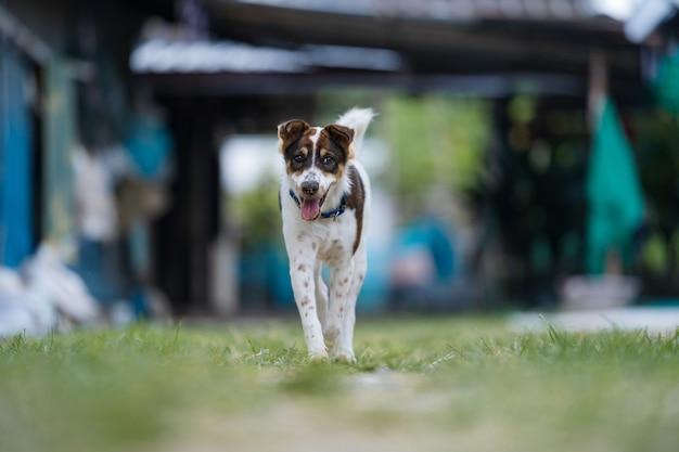 카메라를 향해 달리는 행복한 개