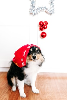 Dog in a hat for the new year and christmas, home decoration for the holiday, puppy