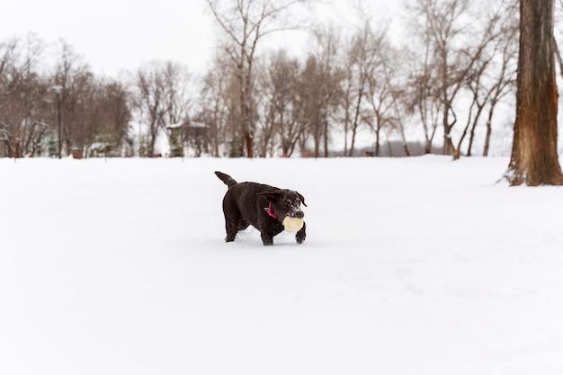 家族と雪の中で楽しんでいる犬