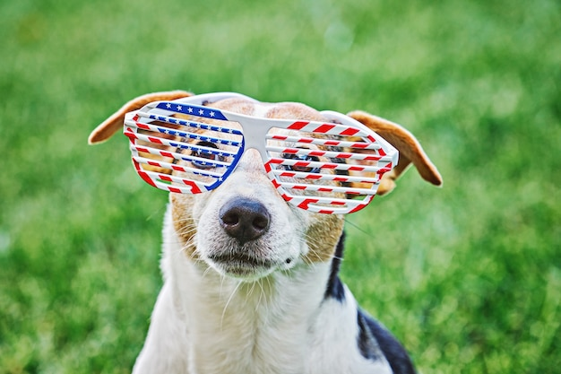 Dog head in big glasses with usa american flag print close up portrait on green grass. celebration of independence day, 4th july, memorial day, american flag day, labor day party event