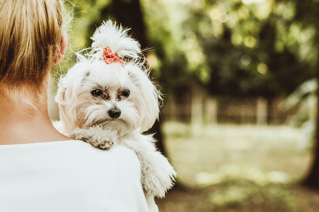 Dog and his owner, happy woman holds white maltese dog.