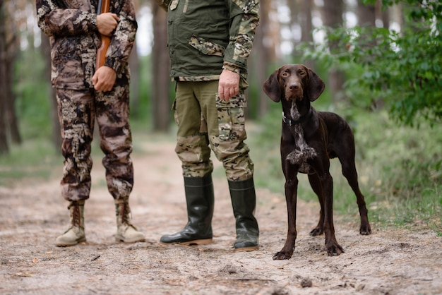 Dog hunt alert pointer with hunters in forest.