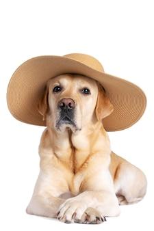 Собака в шляпе на изолированном фоне. отпуск, путешествия, летняя концепция.