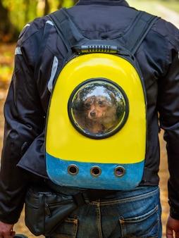 バイカーの後ろにあるオートバイのバッグに入れられた犬