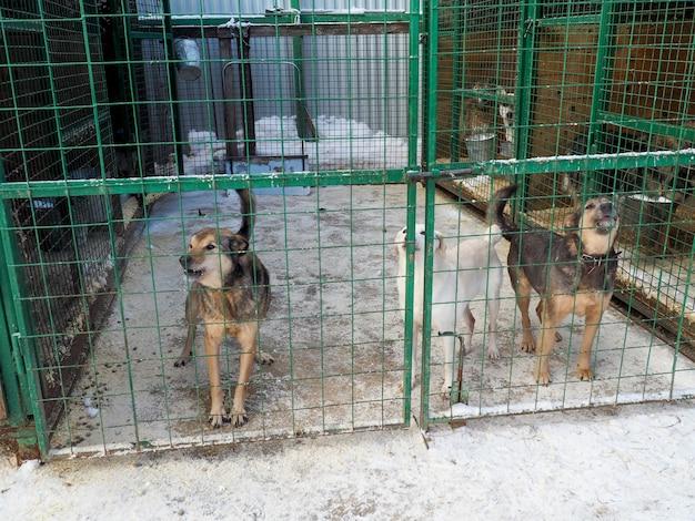 Собака в приюте для животных, бездомная собака в клетке