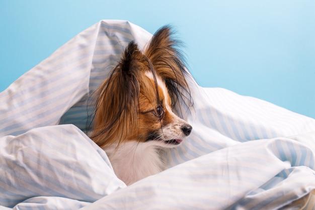 プロファイルに包まれたベッドの中で犬