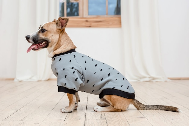 おしゃれな服を着た犬。服を着た犬。犬の服。ペット用品