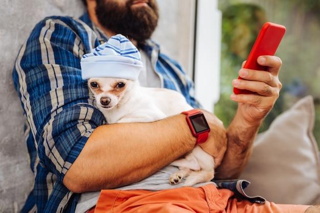 모자에있는 개. 커피 방에서 시간을 보내는 그의 소유자에 앉아 파란색 모자를 쓰고 작은 흰색 귀여운 강아지