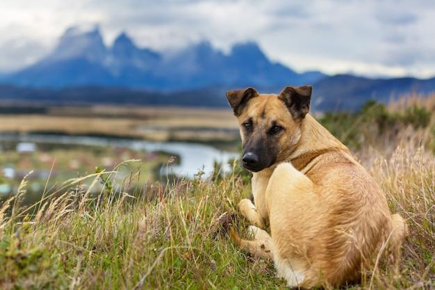 Собака в горах луга