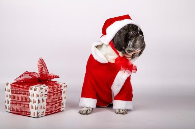 Собака в костюме санта клауса и шляпе с подарочной коробкой с красным бантом.