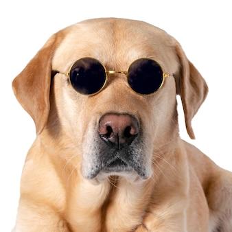 Собака в солнечных очках на белом изолированном фоне.