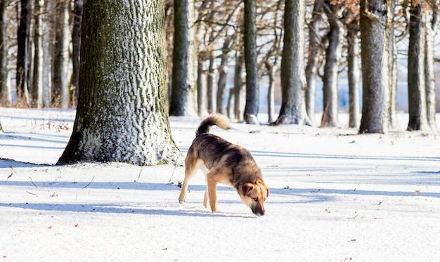 雪の中の森で食べ物を探している犬_