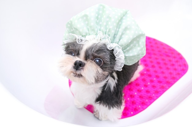 Собака в груминг-салоне; собака принимает душ; питомец получает косметические процедуры в собачьем салоне красоты. в ванной в шапочке для душа