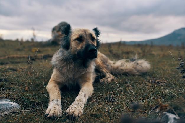 屋外の山の犬は草の旅行風景に横たわっています