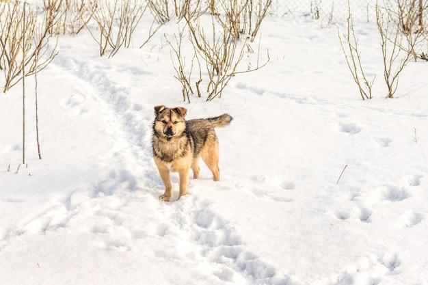 晴天のスグリの茂みの中でウィンターガーデンの犬