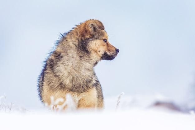 青い空の背景に雪の上の冬の犬_
