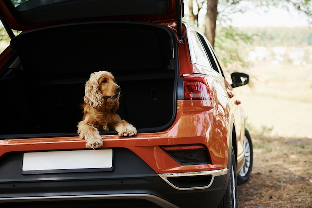 Dog is on the backseat of modern car that parked in the forest.