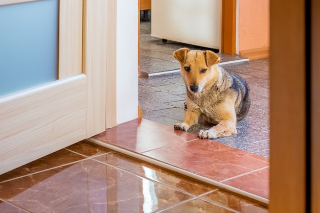 The dog is in the corridor at the entrance to the room. care dogs at home. the dog protects the dwelling