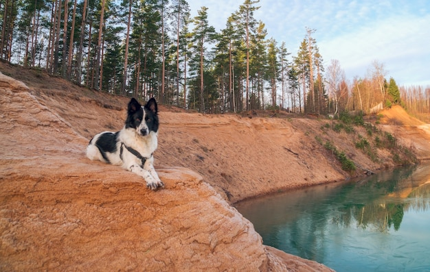 The dog is lying on a sandy slope on the bank of a sand quarry.