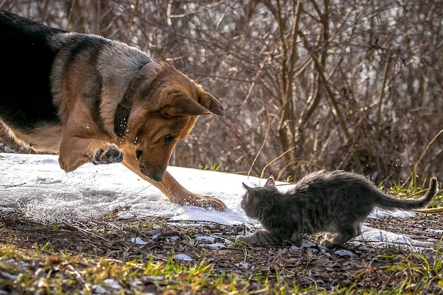A dog is playing with a cat on a snowy lawn