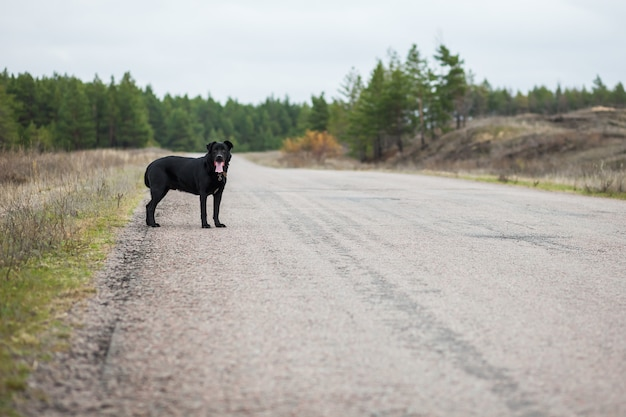 The dog is on the road.