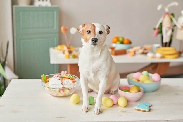 Dog jack russell terrier on easter sitting on the table in the kitchen with eggs and gingerbread