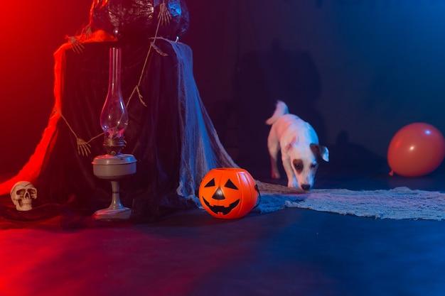 Собака джек рассел терьер на фоне хэллоуина