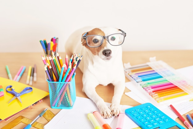 Dog jack russell terrier on a table near school supplies