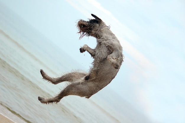 Dog jumping in the beach