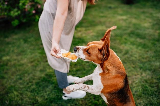 Собака прыгает, чтобы получить удовольствие.