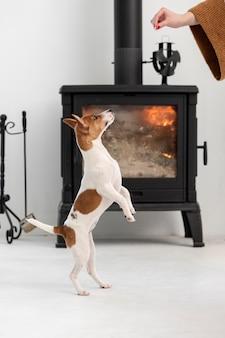 Собака прыгает, чтобы получить удовольствие