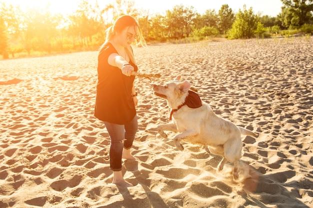 야외에서 개 래브라도 머리는 태양 플레어 명령을 수행합니다.