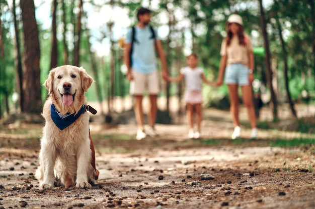 Dog labrador sits in the park in the background mom dad with daughter. happy family on the weekend. camping, travel, hiking.