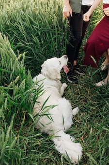 Dog lay down to rest during walk with his owners . pregnant woman . family and pregnancy. love and tenderness. happiness and serenity. taking care of new life. nature and health. leisure activity.