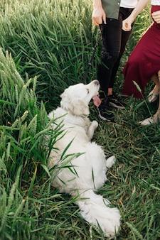 개는 주인과 산책하는 동안 휴식을 취하기 위해 누워 있습니다. 임산부 . 가족과 임신. 사랑과 부드러움. 행복과 평온. 새로운 삶을 돌봅니다. 자연과 건강. 레져 활동.