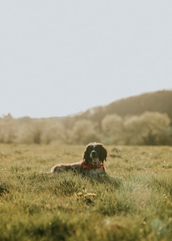 Dog laying down on a grass field