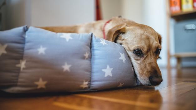 Собака лежит в своей постели