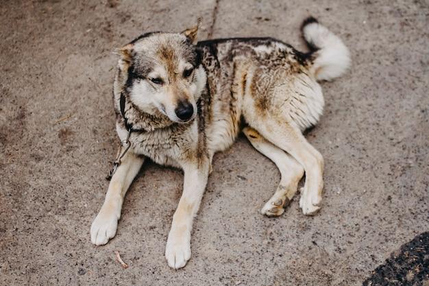 Dog on a leash closeup