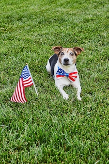 Dog lies in american flag bow tie with usa flag on green grass. celebration of independence day, 4th july, memorial day, american flag day, labor day party event