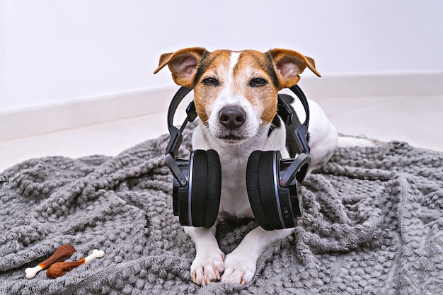 Dog lies in wireless headphones on blanket