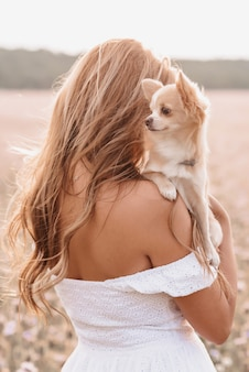 Dog long-haired chihuahua in the hands of a girl in the field in the summer in nature