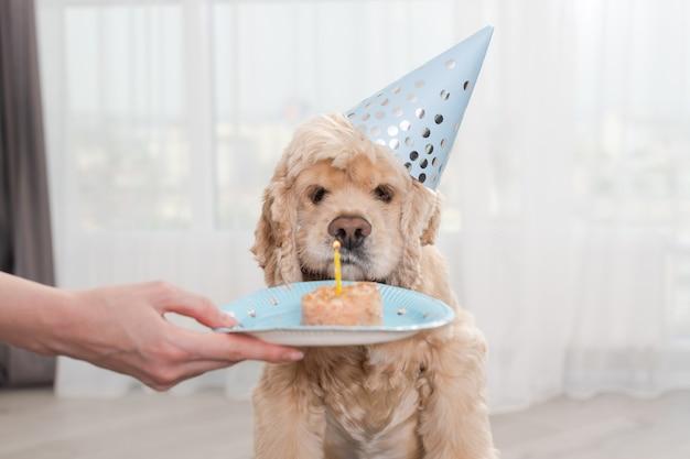 Собака смотрит на свечу на день рождения