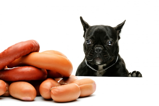 The dog looks at a bunch of sausages. french bulldog and sausages. funny portrait of a black bulldog.
