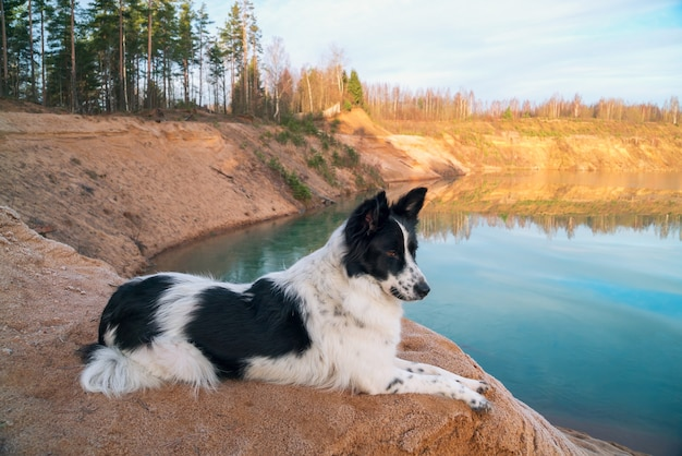 The dog looks into the distance on the bank of a sand quarry.