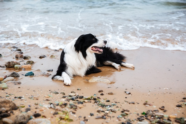 ビーチで横になってリラックスしている犬