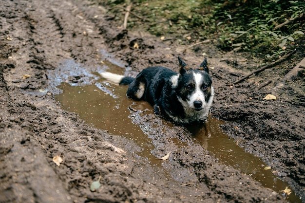 Dog lying in the dirty puddles