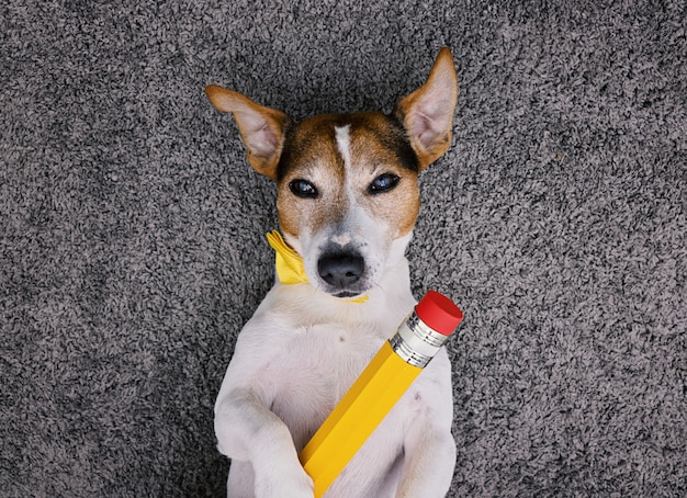 Dog lying on gray background with big yellow pencil